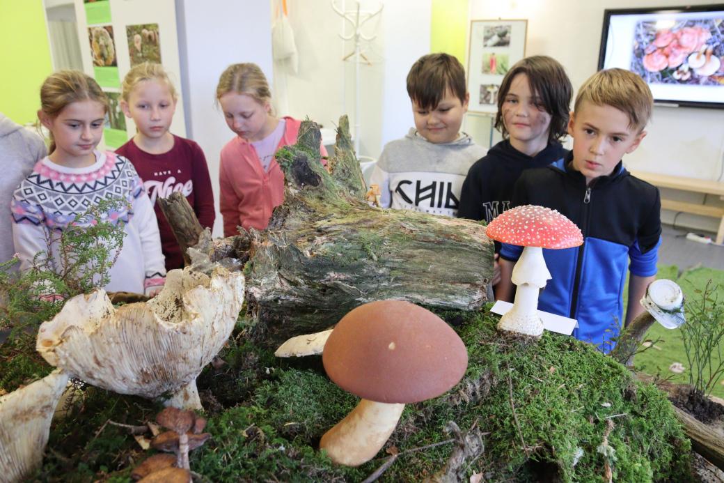 Vmuzeu začaly Výstavy živých hub