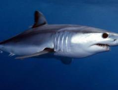 U Dubrovníku se objevil žralok. Policie evakuovala pláž