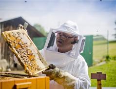 Zastupitelé schválili rámce programů na podporu včelařů, ekologických aktivit, vodohospodářských projektů i boje proti suchu v lesích