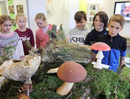 Do muzea na živé houby