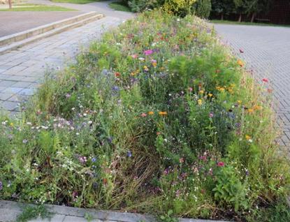 Květiny padly za oběť vandalům