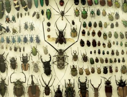 Kraj podporuje záměr vytvořit ve Valašském Meziříčí interaktivní naučnou stezku o životě hmyzu