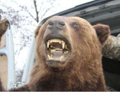 Kraj proplatí první škody způsobené medvědem