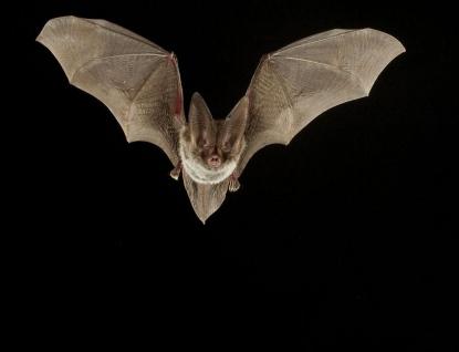 Zámek Lešná u Valašského Meziříčí zve na netopýry