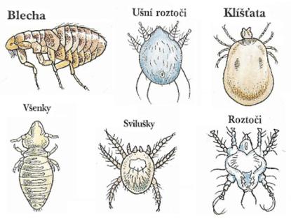 Lékařská zpráva: Česká republika potřebuje odčervit. Je plná parazitů.