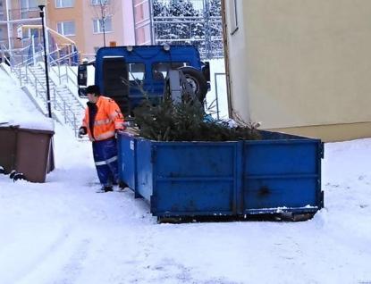 Kam se stromky po vánočních svátcích?