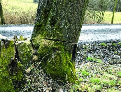 Kdo poškodil stromy v Zašové na Vsetínsku. 15 stromů bylo nutné pokácet