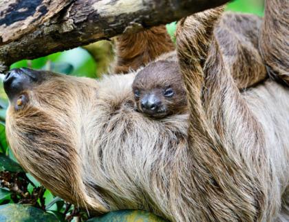 Zlínská zoo konečně otevře i vnitřní pavilony