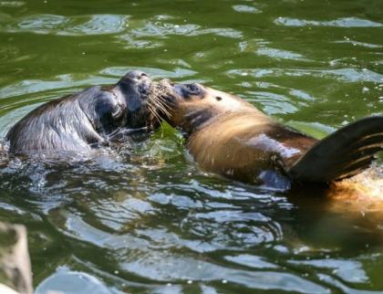 Díky podpoře veřejnosti a pomoci od státu se zlínská zoo může vrátit do provozu bez omezení