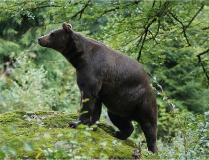 Kraj proplatí škody způsobené chráněnými živočichy