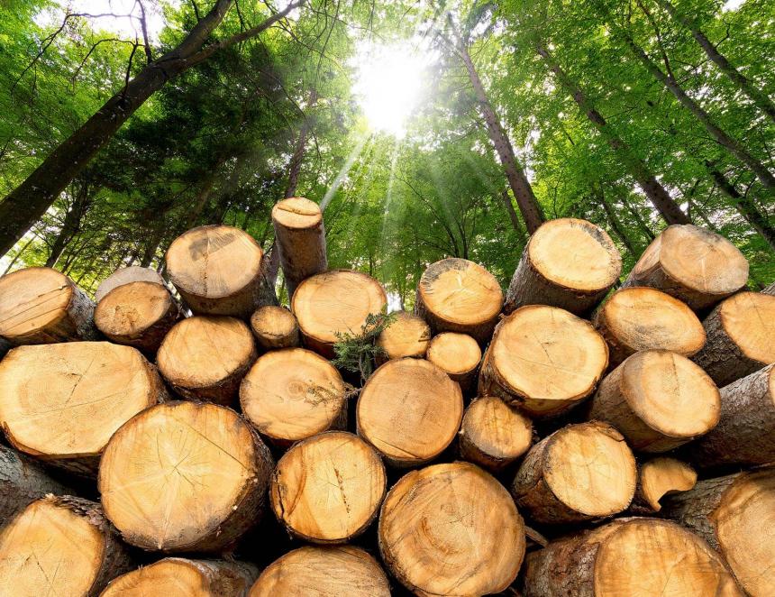 Vokolí Jurkovičovy rozhledny se bude těžit dřevo