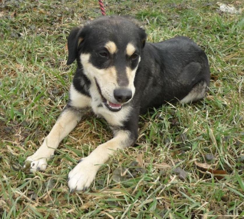 Zbezpečnostních důvodů končí služba venčení psů umístěných v útulku
