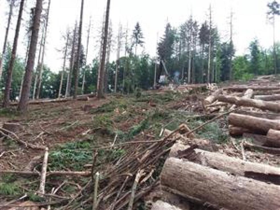 Městské lesy obnovují kůrovcové holiny, obracejí se i na veřejnost