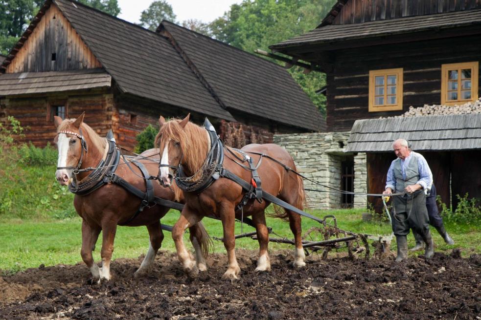 Podzim na poli a v chalupě - ukázky prací v areálu Valašské dědiny