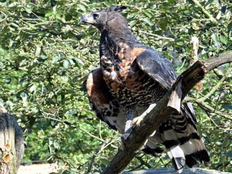 Ornitologiové jásají - v našem kraji se objevil orel královský