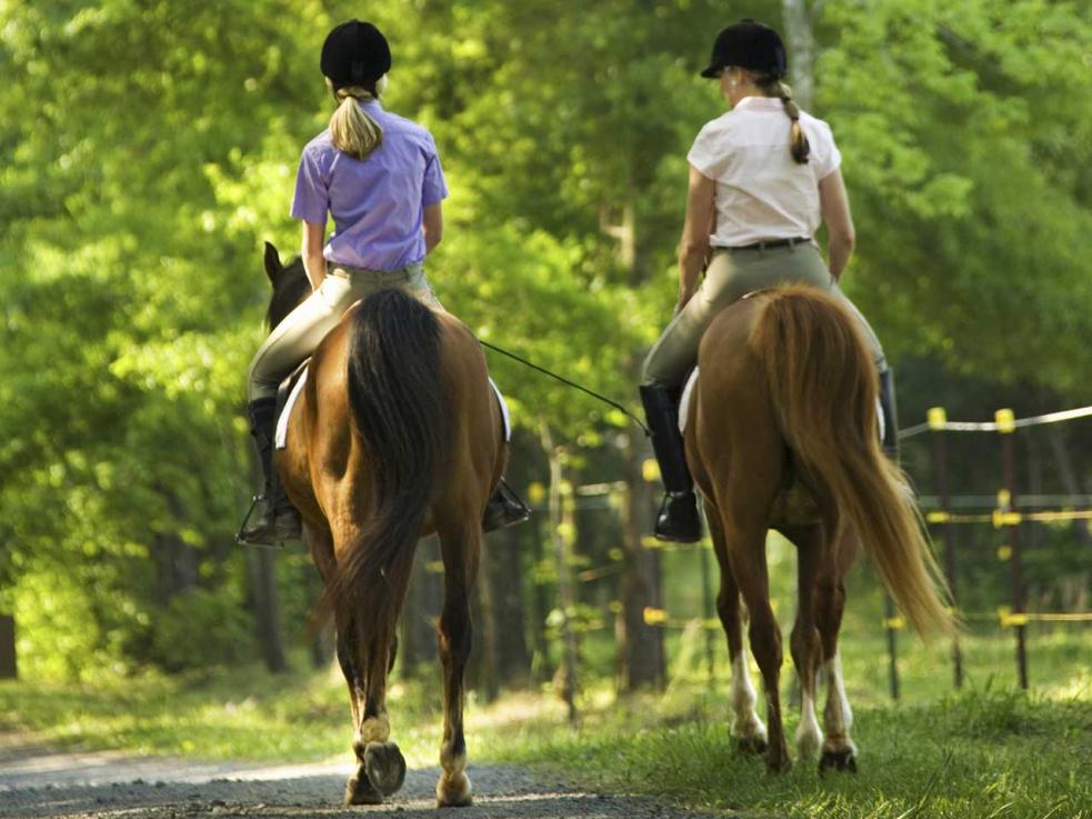Dodávka se srazila s koněm. Jezdkyně byla letecky transportována do nemocnice