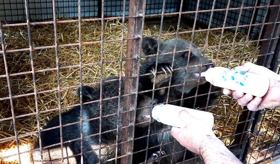 Policisté na hranicích asistovali při předávání medvíďat