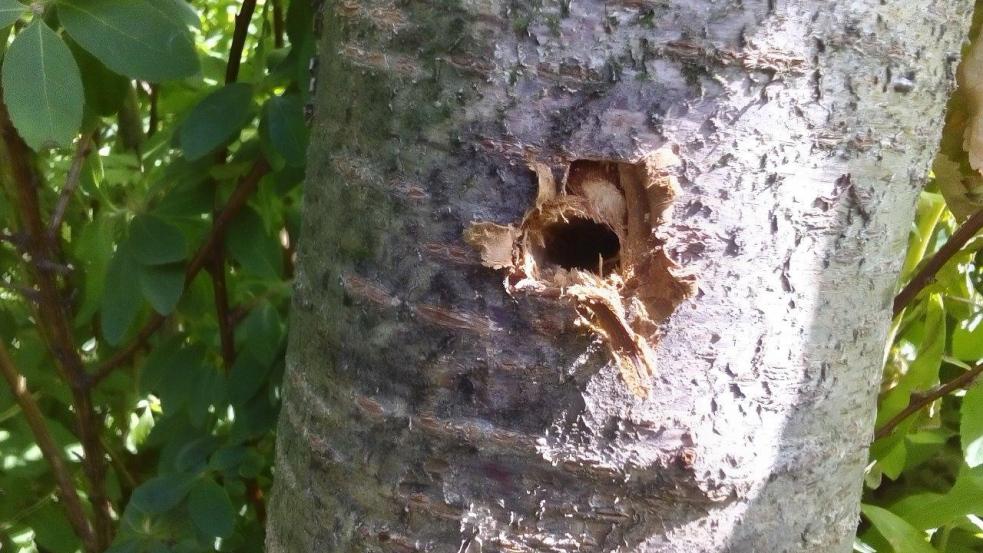 Již deset stromů padlo za oběť neznámému vandalovi