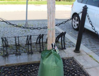 Stromům na rožnovském náměstí ve vedrech pomohou speciální vaky svodou