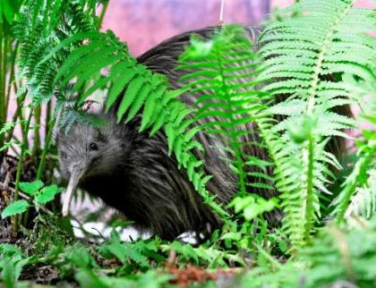 Zlínská zoo chystá oblíbené ranní vycházky za kivim