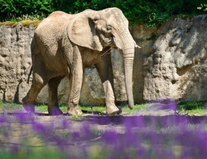 Zlínská zoo hlásí nový návštěvní rekord, dařilo se i zámku Lešná