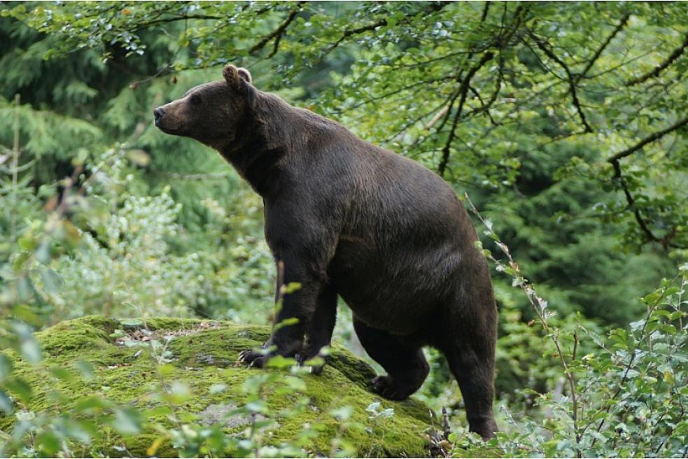Zlínský kraj proplatí dalších 160 tisíc za škody způsobené medvědem