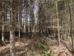 Zlínský kraj vloni na podporu zmírnění následků sucha vlesích uvolnil více než 4 miliony korun