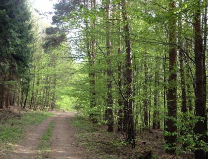 Na boj se suchem dal vloni kraj vlastníkům lesů více než 8 milionů korun