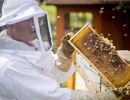 Krajští radní schválili dotace na podporu včelařů, ekologických aktivit, vodohospodářských projektů a boj proti suchu