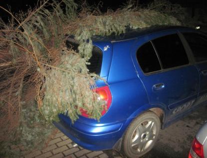 V noci vítr opět vyvracel v kraji stromy