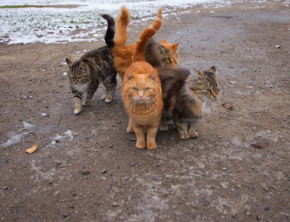 Kastrační program pro kočky pokračuje i vroce 2020