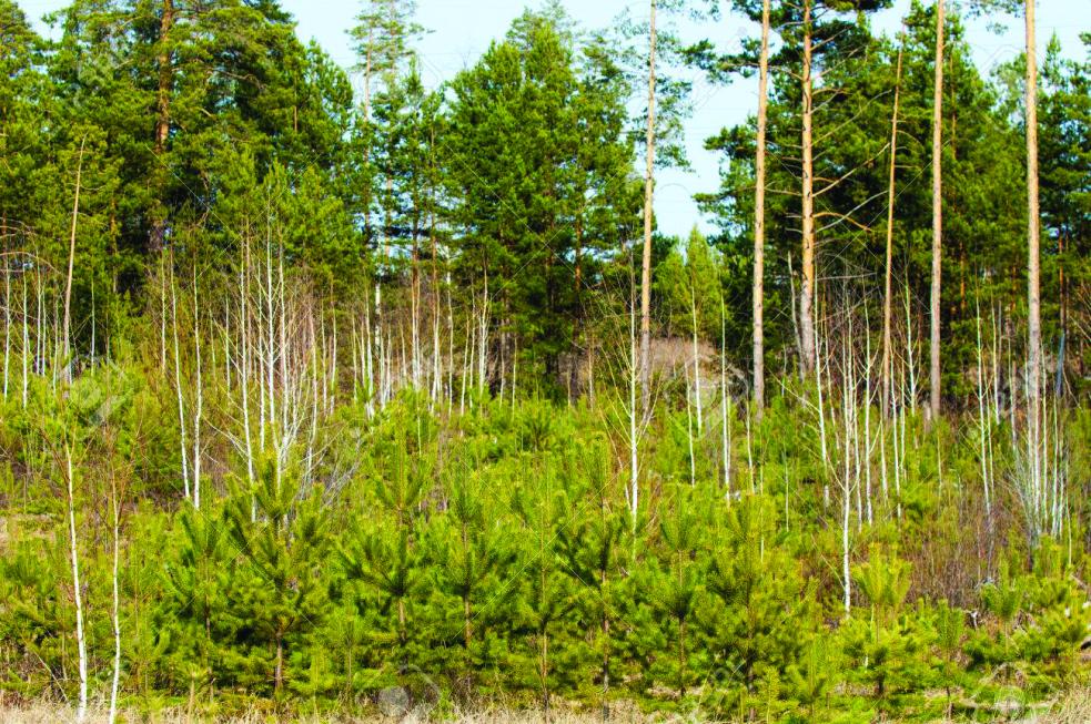 Vstup do mladých lesů je zakázán