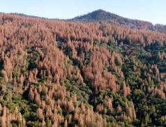 Boj skůrovcem vlesích na Valašsku pokračuje