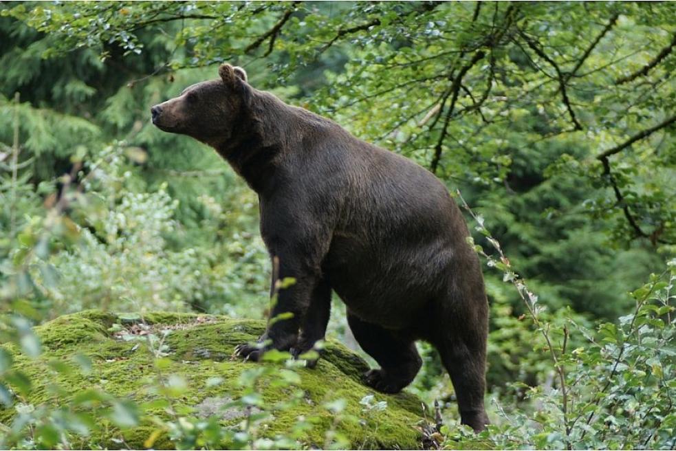 Škody způsobené vydrou a medvědem proplatí kraj