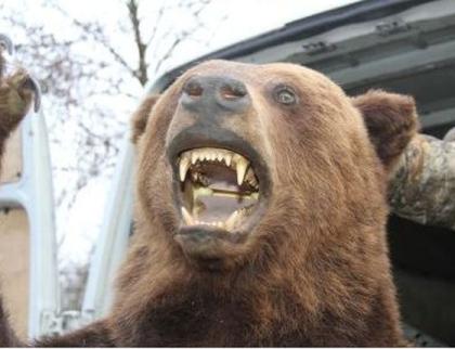 """Medvěda na Zlínsku nikdo neviděl tři měsíce. """"Už nežije,"""" tvrdí Čunek"""