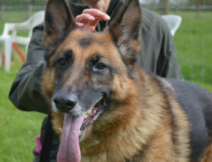 Kynolog naučil psa vyčenichat covid! Ministerstvo zdravotnictví to ale nezajímá