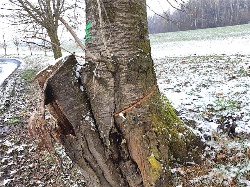 Případ nařezaných stromů v Zašové. Policie žádá veřejnost o pomoc