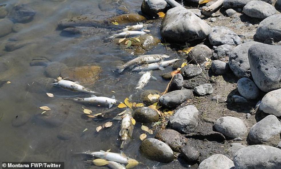 Šetření masivního úhynu ryb v Bečvě pokračuje. Znalec požádal o prodloužení lhůty
