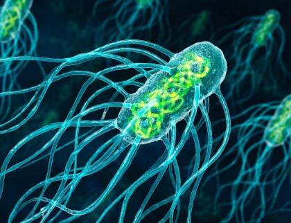Ve Zlínské nemocnici se 29 lidí nakazilo salmonelou