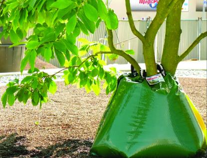 Ve Valašském Meziříčí začali zalévat stromy pomocí speciálních zavlažovacích vaků