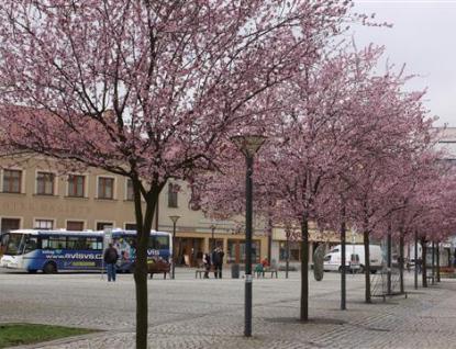 Ulice města Vsetína letos více pokvetou