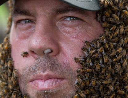 Mezi včelaře rozdělí Zlínský kraj více než milion korun