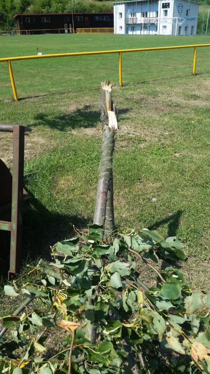 Vandal polámal v Liptálu několik stromků